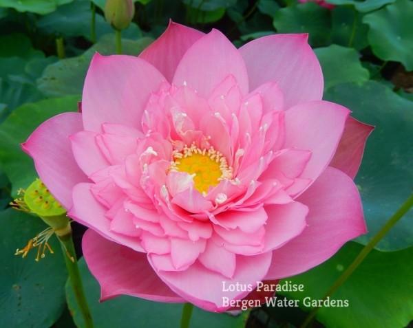 Spring in Peach Garden
