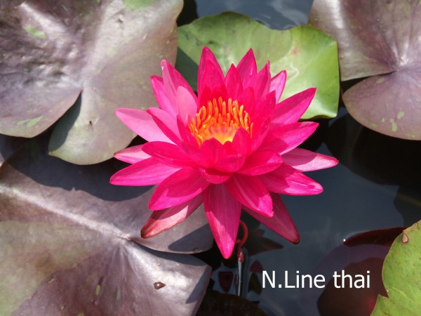 Line Thai