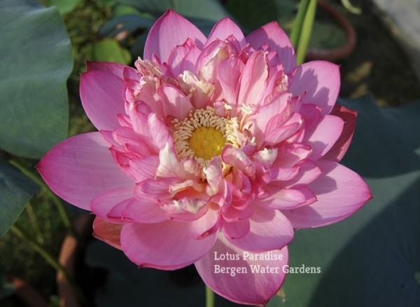 Pearl of Jiangnan